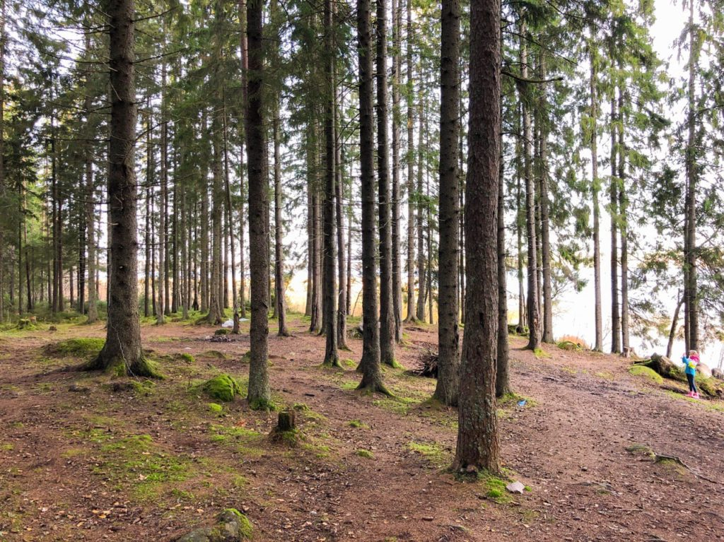 Лесные участки