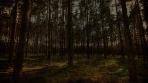 Сосновый лес на участке